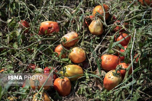 خسارات تگرگ در ۴۷ روستای ارومیه