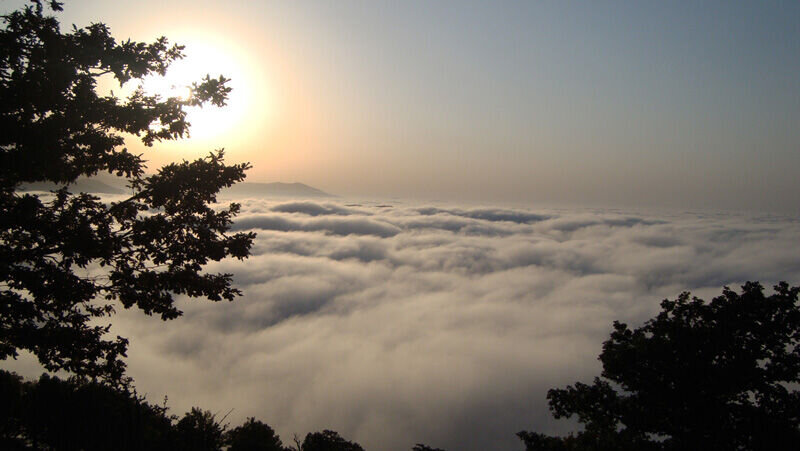 Iran's Abr Forest: Forest surrounded by clouds