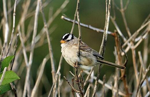 حشرهکشی پرمصرف که پرندگان مهاجر را میکشد