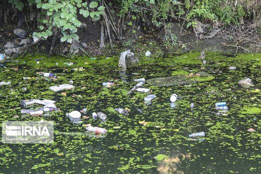 گیاه مهاجم آزولا در رودخانه های آستارا