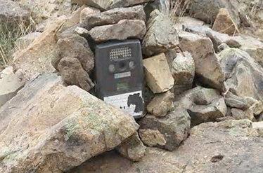 سرقت دوربینهای مداربسته اطراف قفس یوزپلنگ آسیایی