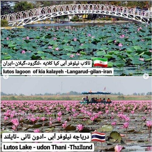 تالاب نیلوفر آبی کیا کلایه لنگرود و دریاچه نیلوفر آبی تایلند