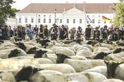فیلم | تجمع گوسفندان جلو کاخ ریاست جمهوری آلمان