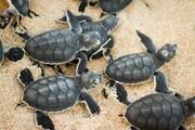 تصاویر | تاثیر تغییرات اقلیمی بر حیاتوحش استرالیا