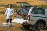 تصاویر | ۶۰ پرنده شکاری در همدان رها شدند