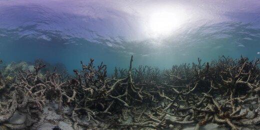 تاثیر تغییرات اقلیمی بر حیات وحش استرالیا