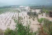اعتبار ۱۵۵میلیارد ریالی برای جبران خسارات سیل به کشاورزی آذربایجانغربی