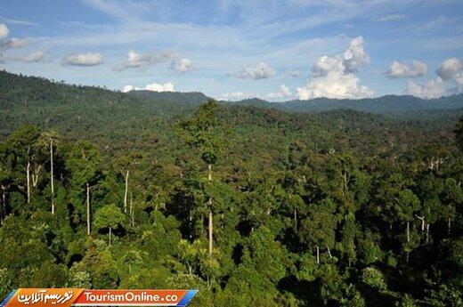 جنگلهای بورنئو