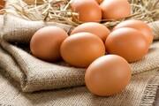 تخم مرغ در مسیر ارزانی به کیلویی ۵ هزار و ۶۰۰ رسید