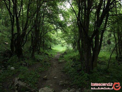 دره جنگلی مکیدی، بهشت کلیبر در آذربایجان شرقی!