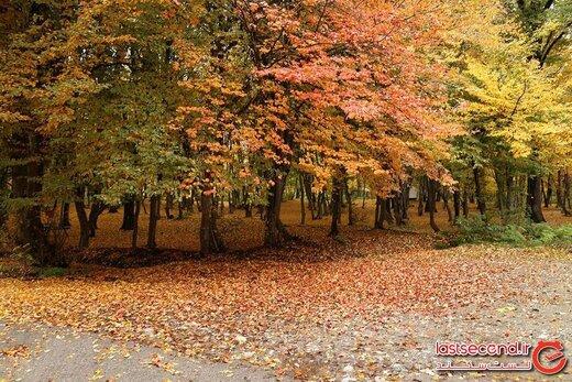 پارک جنگلی قرق، میزبان رنگ ها در گرگان!