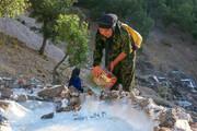 تصاویر | استخراج نمک در مسیرهای صعبالعبور