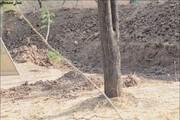 تصاویر | استتار حیرتانگیز یک پلنگ در تپههای خاکی!