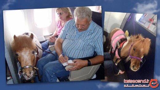 ۱۰ حیوان خانگی عجیب که افراد می توانند به داخل هواپیما بیاورند!