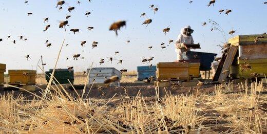 برندسازی عسل کردستان به ایجاد اشتغال و تولید استان کمک میکند