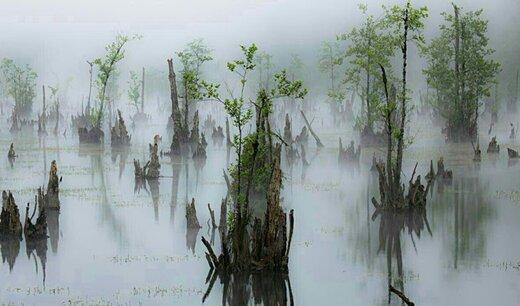 درختان تسخیر شده دریاچه ارواح