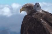 فیلم | یخچالهای آلپ از نگاه یک عقاب در حال پرواز