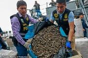 تصاویر | کشف ۱۲.۳ میلیون لاشه اسب دریایی در یک کشتی!