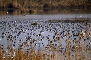 تالاب های چهارمحال و بختیاری از اواخر مهرماه میزبان پرندگان مهاجر است