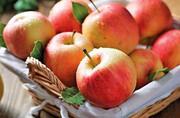 قیمت خرید سیب صنعتی در آذربایجانغربی مشخص شد: هر کیلو ۶۰۰ تومان