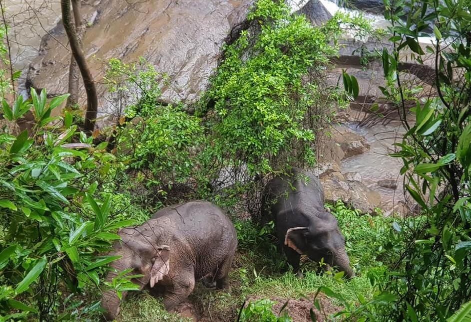 مرگ شش فیل بر اثر سقوط از یک آبشار در تایلند