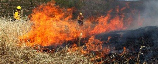 تولید یک ژل برای پیشگیری از آتشسوزی جنگلها