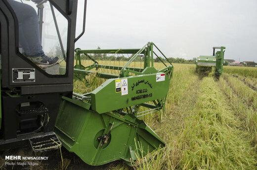 معاون وزیر جهادکشاورزی: در تولید برنج خودکفا هستیم