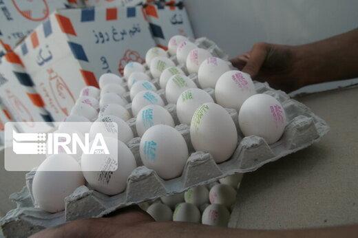 بازارهای خارجی تخممرغ را از دست دادیم