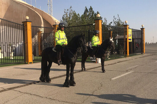 فیلم | این اسب غول پیکر هلندی ۵ هزار یورویی در ورزشگاه آزادی