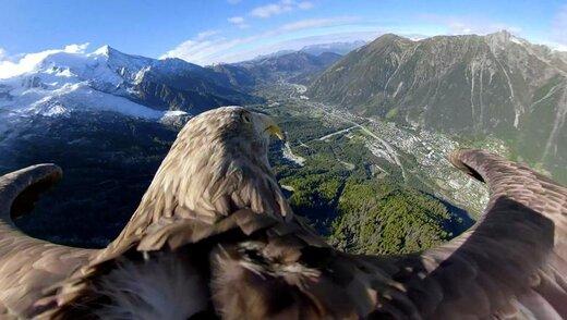 پرواز یک عقاب دریایی دمسفید 9 ساله مجهز به دوربین 360 بر بالای یخچالهای طبیعی و کوهستانهای فرانسه