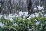 اخطار سازمان هواشناسی برای استانهای ساحلی خزر/ تهران بالاخره بارانی میشود؟