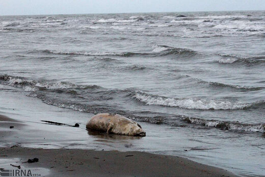 انتقال آب دریای خزر، جنگلهای هیرکانی را نابود میکند؟