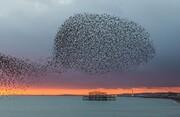 عکس | پرواز گروهی سارها در عکس روز نشنال جئوگرافیک
