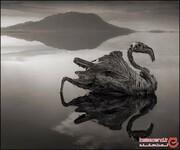 راز دریاچهی عجیب و مخوفی که حیوانات را به سنگ تبدیل میکند، فاش شد!