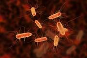 نقش باکتری روده در مقابله با اثرات مضر غذاهای فرآوریشده