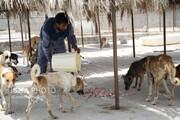 بررسی دستورالعملی برای کنترل جمعیت سگهای بدون صاحب در شورای شهر