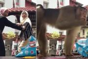فیلم | حمله وحشیانه میمون بازیگوش به سلفی دختران