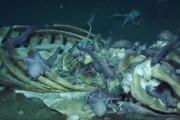 فیلم | خیمه سنگین اختاپوسها روی بقایای یک نهنگ