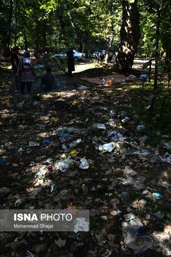 رهاسازی زبالهها در جنگل گلستان
