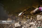 تصاویر دلخراش از مرگ ماهیهای «قرهسو» به دلیل جنایت انسانی