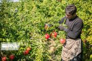 تصاویر | روستای سرریز؛ باغبانی در شرایط دشوار!