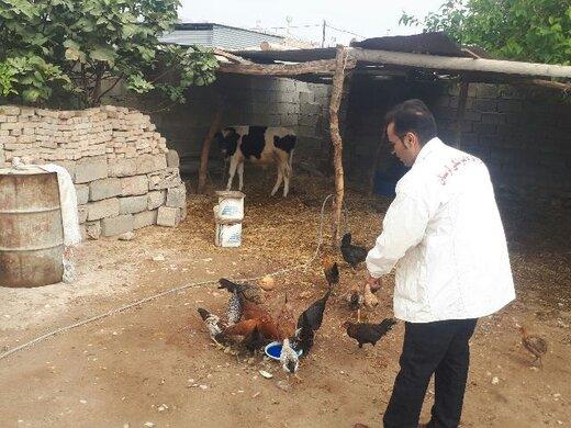 اجرای طرح واکسیناسیون طیور بومی درشهرستان پلدختر