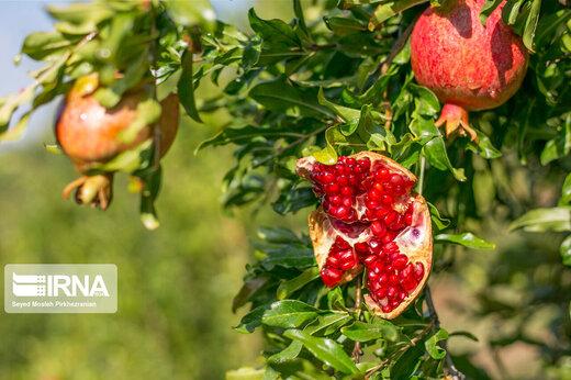 روستای سرریز استان کردستان