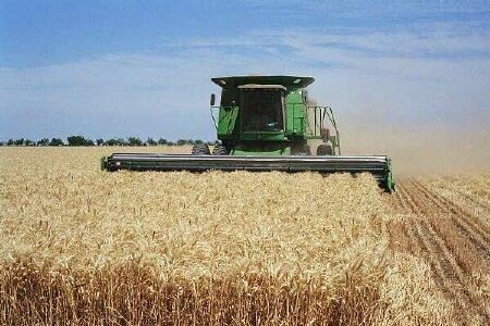 گندم در بازارهای جهانی ارزان شد