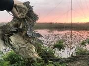 تصاویر | لحظه طلوع آفتاب در شکارگاه غیرقانونی پرندگان !