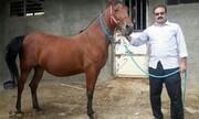 نارضایتی پرورش دهندگان اسب از عدم حمایت مسئولان جهاد کشاورزی لرستان