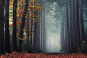 تصاویر جادویی از جنگلهای پاییزی هلند