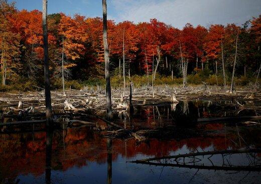 پاییز در کانادا