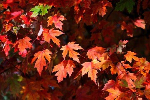 پاییز در فرانسه