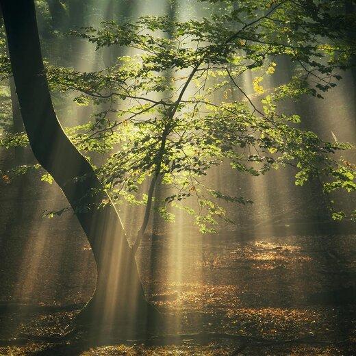 جنگلهای هلند